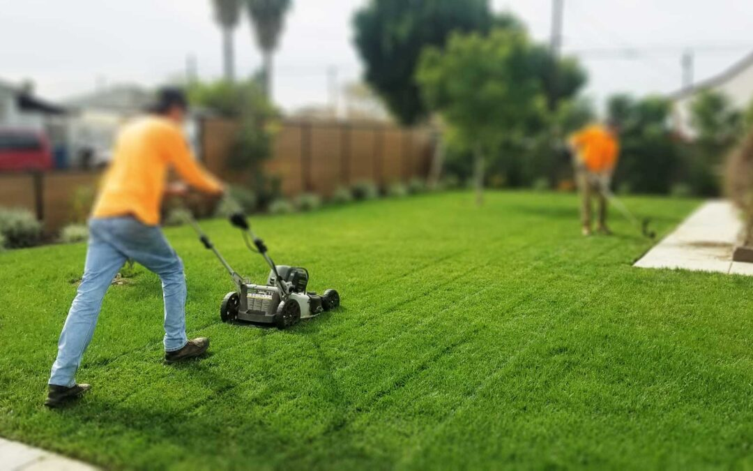 Best Lawn care tips: Get a Perfect Lawn!