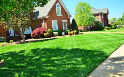 Summer Lawn Watering Guide: Steps To Have A Great Lawn